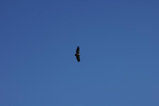 La Farinera: Avista-miento de Aves