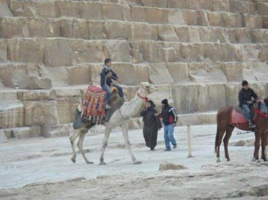 Pyramiderna utanför Giza: Верблюды