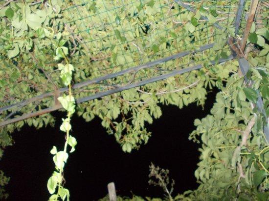 Agriturismo Grossola: Gli angolini nascosti dell'agriturismo