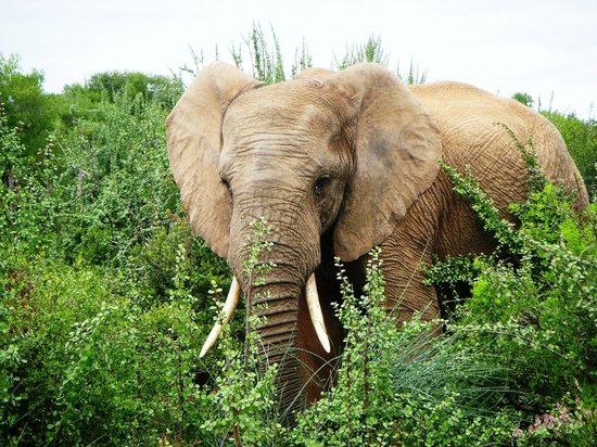 Woodall Country House and Spa: Addo Elephant Park