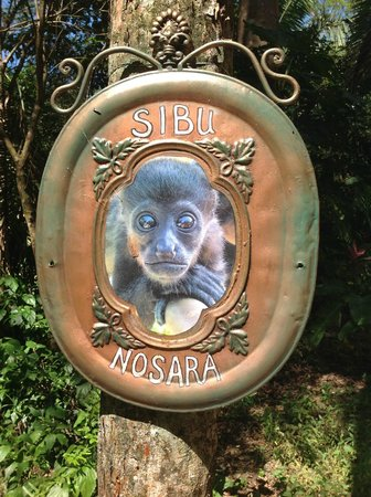 Nosara Wildlife Sanctuary at Sibu : Sibu sign