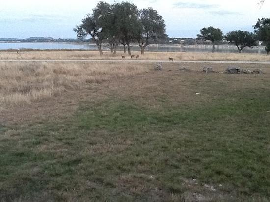 Canyon Lake, TX: Our deer friends on their morning visit.