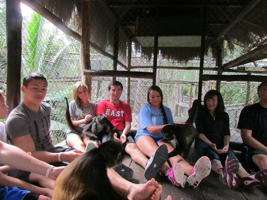 The Jungle Place - Tours: 8