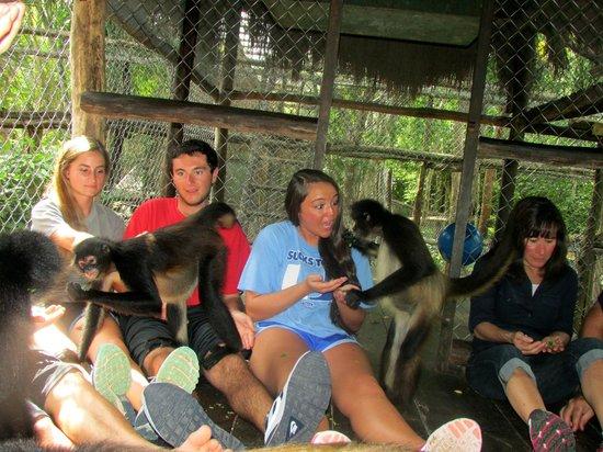 The Jungle Place - Tours: 6
