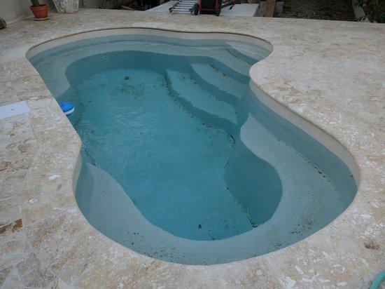 CoralSea Apartments Bonaire: The pool