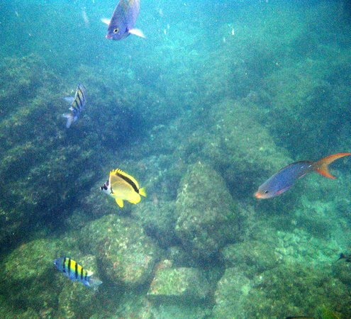 Curu National Wildlife Refuge: Isla Tortuga Snorkeling