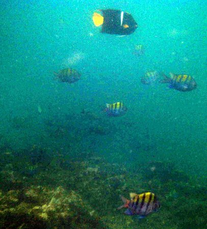 Curu National Wildlife Refuge: Snorkeling at Isla Tortuga