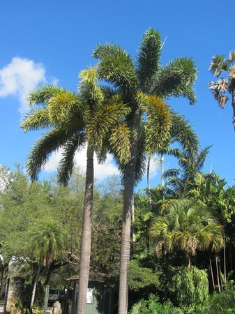 Fairchild Tropical Botanic Garden: Palms