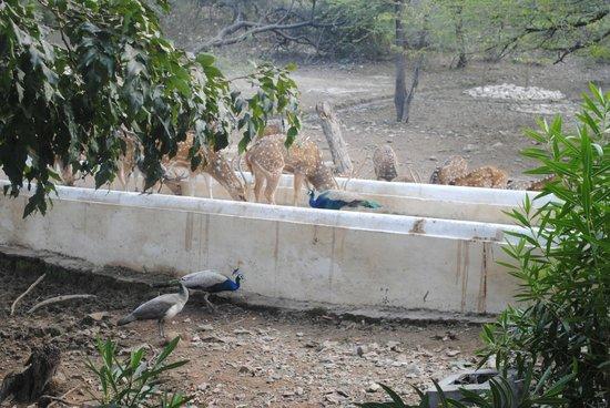 Shikarbadi: wildlife feeding place