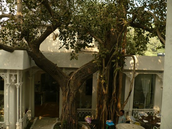 Olive Bar & Kitchen: Il giardino interno