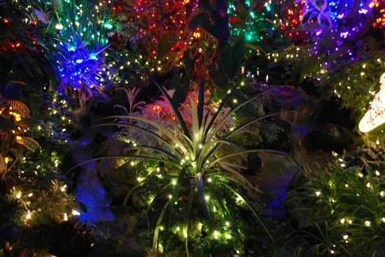 Manito Park : Lots of lights