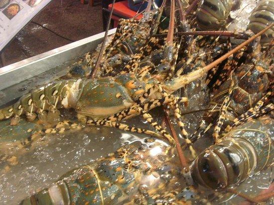 KO Seafood Restaurant: Petit homard