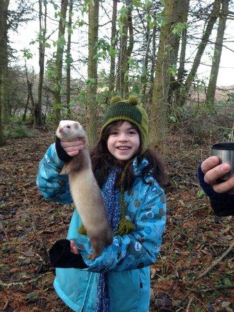 Edinburgh Falconry & Fishing: Ferrets!!