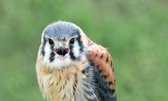 National Centre for Birds of Prey : Leave me alone