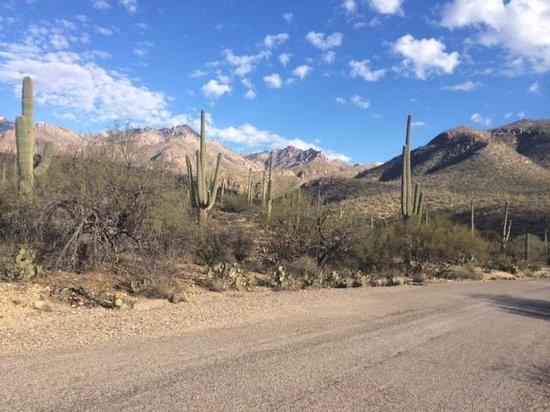 Canyon Ranch in Tucson : Sabino Canyon