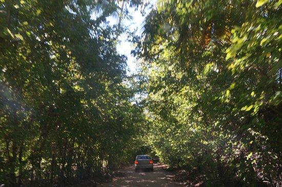 Praia do Patacho: Estrada de terra para chegar até a praia