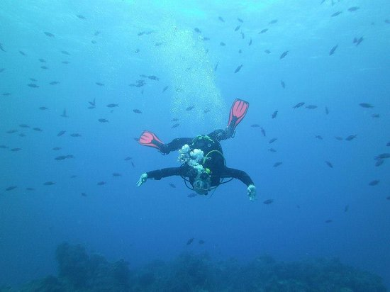 Marko's The Parrotfish Dive Center: Disfrutando al máximo¡¡¡