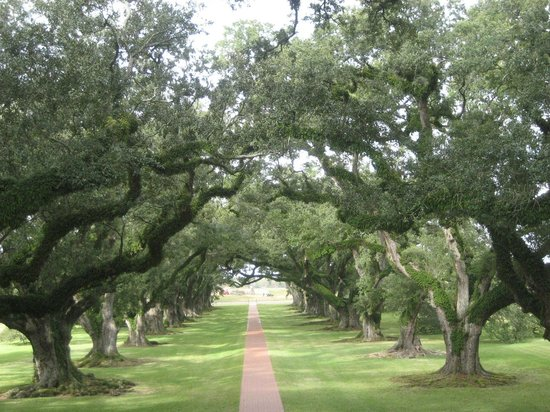 Bourbon Orleans Hotel : Oak Alley Plantation
