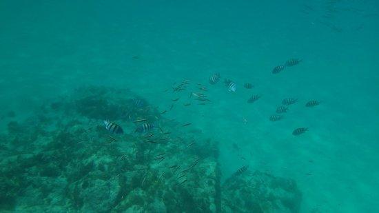 Baia dos Porcos: azul da côr do mar