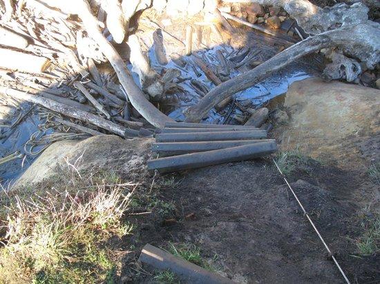 Schooner Gulch State Beach: Be prepared to climb down this make shift ladder
