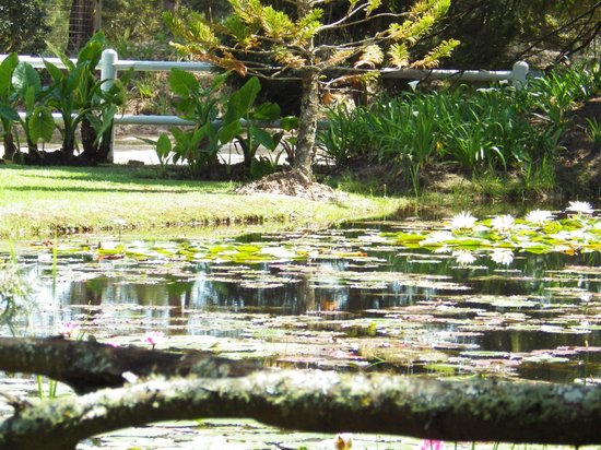 Lairds Lodge Country Estate: Across the lily pond from garden room