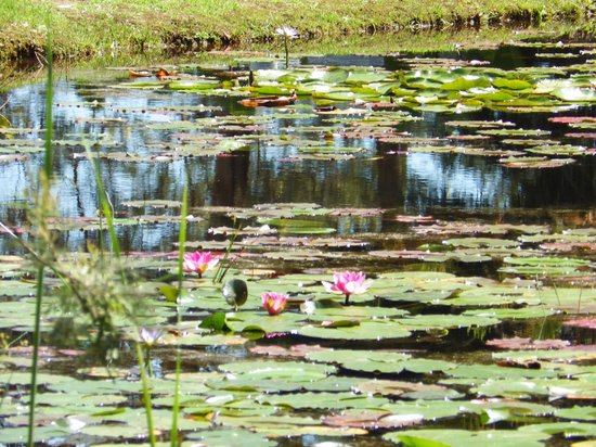 Lairds Lodge Country Estate: the lily pond