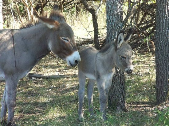 Mayan Dude Ranch: New Burros