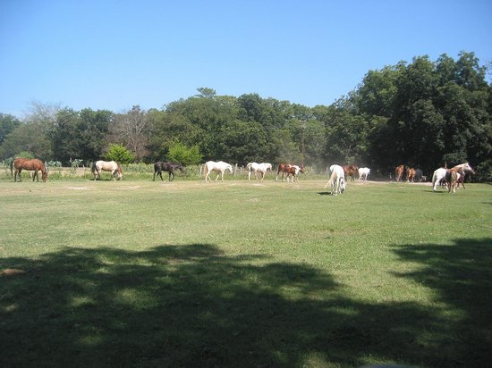 Mayan Dude Ranch: Horses