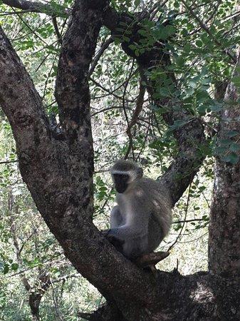 ATKV Klein-Kariba : Monkey