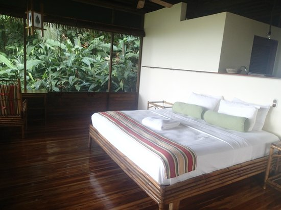 Lapa Rios Ecolodge Osa Peninsula : You can see here the nice foliage around the rooms.