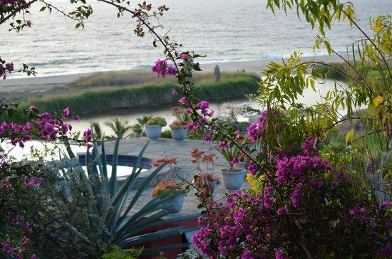 Los Colibris Casitas: Path view