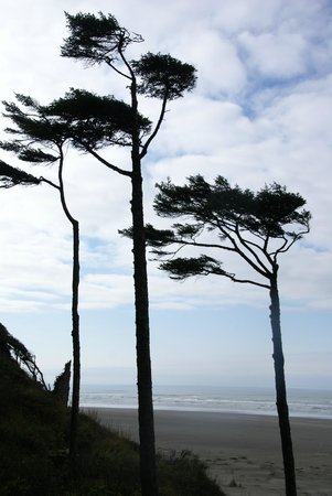 Seabrook Cottage Rentals: Windswept Pacific trees