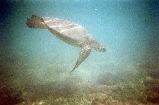 Hanauma Bay Nature Preserve: Hanu