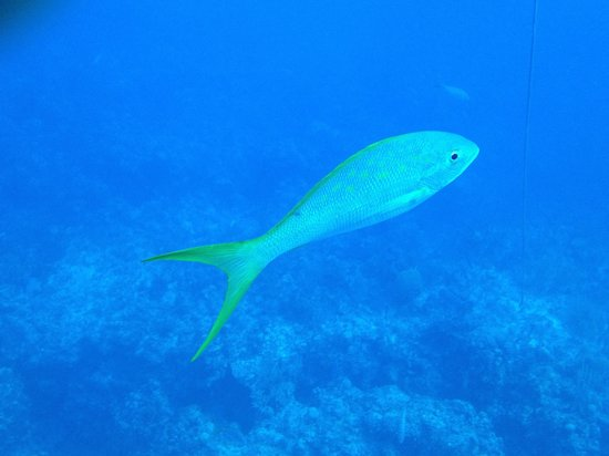 Grand Bahama Scuba: First thing I saw in the water.