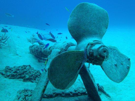 Grand Bahama Scuba: Under the sea...