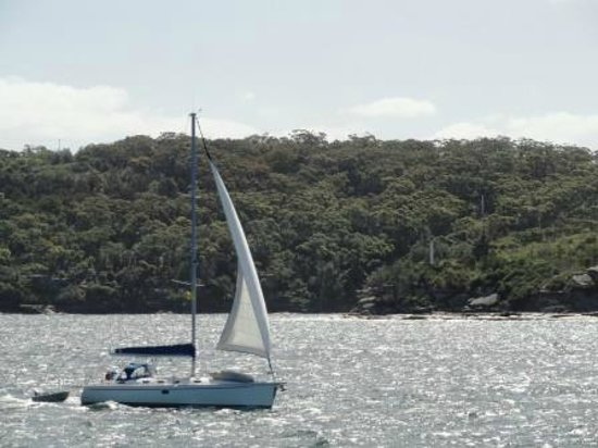 Manly Scenic Walkway : the ferry ride back