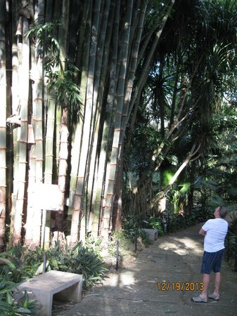 Zoo Ave: Giant Bamboo, sounds like it's going to fall on you when it blows in the wind.  So amazing!!