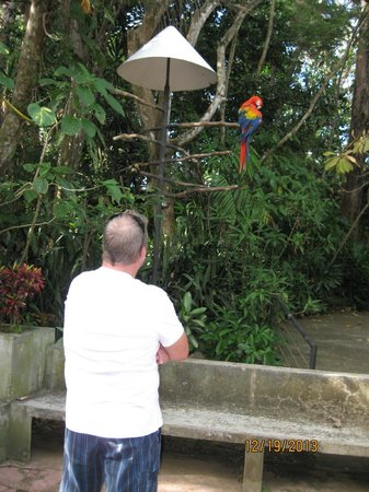 Zoo Ave: Macaws