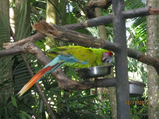 Zoo Ave: A rare parrot species of Costa Rica