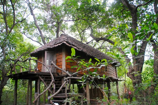 andBeyond Lake Manyara Tree Lodge : our tree house