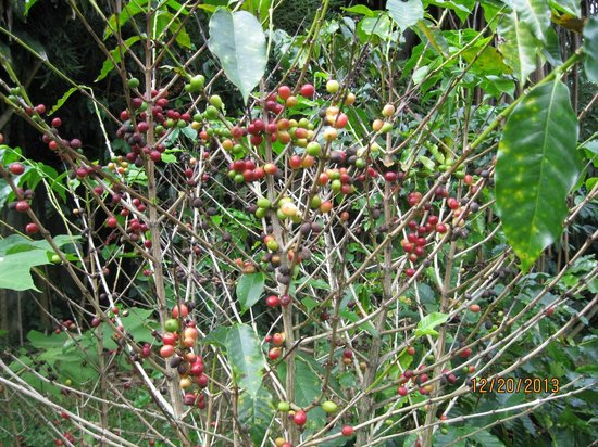 Pura Vida Hotel : Coffee in the hotel garden