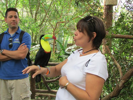 Go Tours Costa Rica - Day Tours : Fun with Toucans!