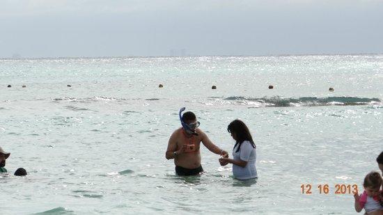 Sandos Caracol Eco Resort: Frente al resorte, haciendo snorkel
