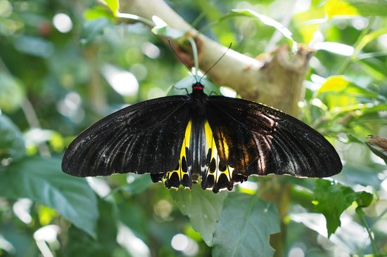 Entopia: M size butterfly