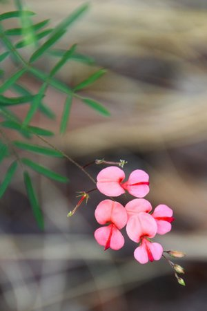 Zwahili Private Game Lodge & Spa: More stunning veld flowers