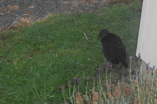 Russell --Orongo Bay Holiday Park: Weka