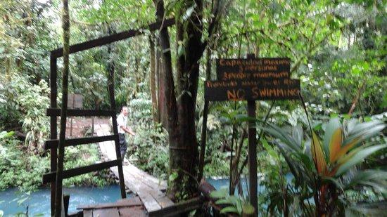 Rio Celeste: national park trail bridge