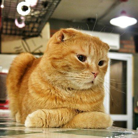 Hongik University Street : One of the cats in Godabang Cat Cafe located in the surrounding area of Hongik University.