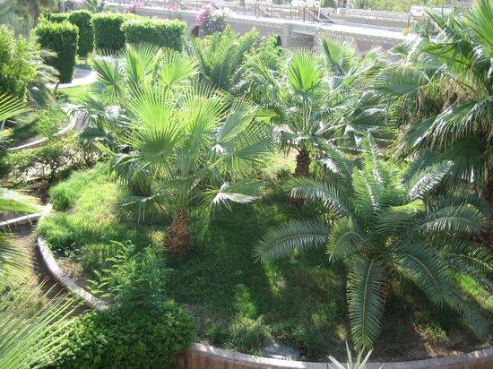 Aladdin Beach Resort: Вид из окна номера
