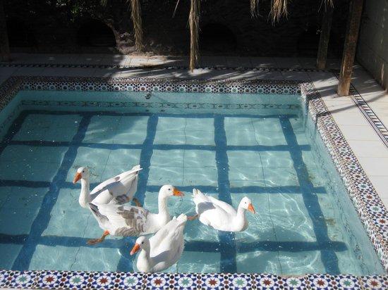 Dessole Aladdin Beach Resort : Зоопарк на территории Жасмин